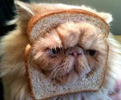 Cat Breading Meme - paw some 20 pictures of cat breading gurl com gurl com