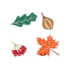 Thanksgiving Vector Art Fall Maple Leaves Icon Flat Graphic Design Clip Art Vector Images