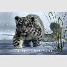 cards 5 or 10 pack snow leopard 18 x 12cm coleman