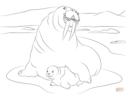 walrus with cute baby coloring page free printable coloring pages
