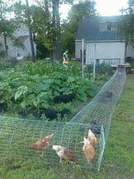Can I Raise Chickens In My Backyard Best 25 Chicken Pen Ideas On Pinterest Chicken Coops Chook Pen