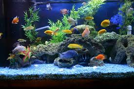 Aquarium Decoration Ideas Freshwater Types Of Freshwater Aquariums U2013 The Aquarium Setup Filtration