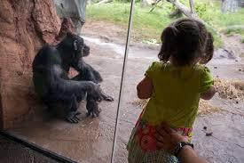 zoo boo