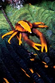 2129 best spineless down under images on pinterest animals