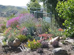 drought tolerant landscaping ideas succulents grasses and