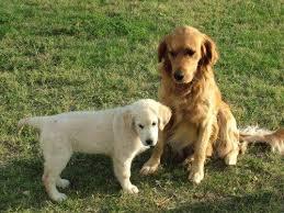 cani in cerca di casa cani in cerca di casa l iniziativa dell asl di terni tuttoggi