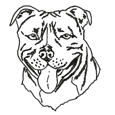 drawn pit bull staffordshire bull terrier pencil and in color
