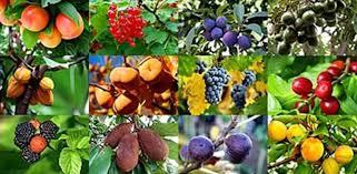 gardenarium fruit trees