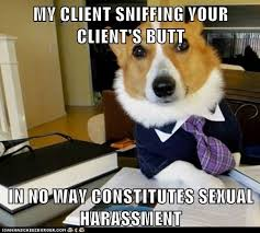Sexual Harrassment Meme - i can has cheezburger sexual harassment funny animals online