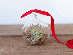 air plants tillandsia terrariums u0026 gifts air plant design studio