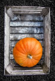 free images field orange food autumn pumpkin halloween