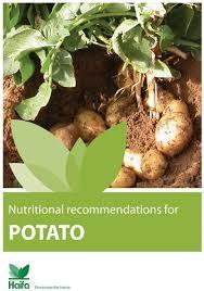 potato fertilizer u2013 haifa group