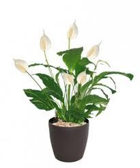 plante de bureau plante pour bureau florideeo