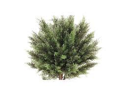 tronc d arbre artificiel arbre artificiel cypres tronc naturel h 146cm