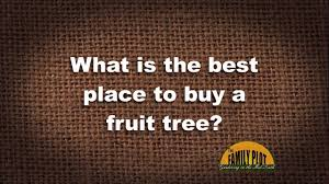 q a what is the best place to buy a fruit tree