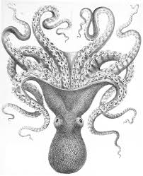 drawn octopus public domain pencil and in color drawn octopus