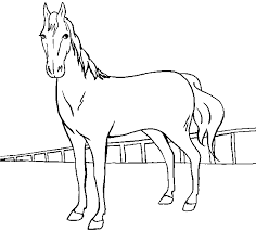 color horse pictures