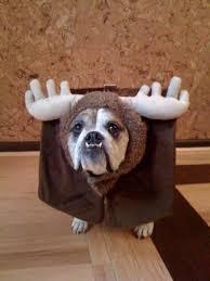 Halloween Costumes Bulldogs Halloween Costume Design Bulldog Pinx Pets