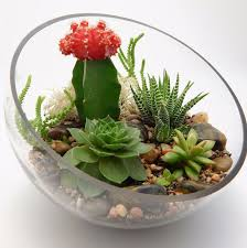 Hanging Succulent Planter by Best 20 Succulents In Glass Ideas On Pinterest Terrarium Diy