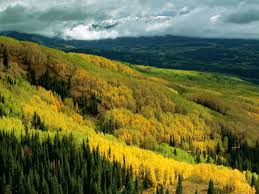 Ohio forest images Aspen forest in early fall ohio pass gunnison national forest jpg