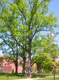 tree walk guide