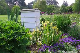 Raising Bees In Backyard by Bees And The Law What You Need To Know Hobby Farms