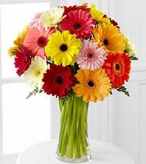 gerbera bouquet colorful world gerbera bouquet 18 stems vase included