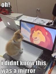 Mirror Meme - a kitty mirror meme slapcaption com funny pinterest meme
