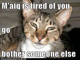 Khajiit Meme - khajiit kitten google search skyrim stuffz aka khajiit lover