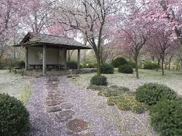 Botanic Garden St Louis by Cherry Blossoms At The Missouri Botanical Gardens St Louis