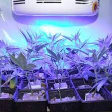 ufo led grow light all blue led grow light for grow plants flowering and fruiting