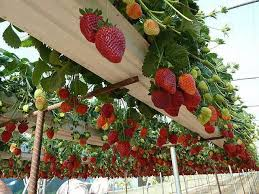 best 25 vertical vegetable gardens ideas on pinterest small
