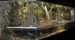 reticulated python and monster fish monsterfishkeepers com
