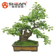 discount sale bonsai trees 2018 bonsai trees sale on sale at