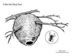 paper wasp nest coloring