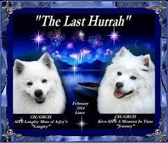 american eskimo dog forum angelheart eskies american eskimo dogs current puppy info