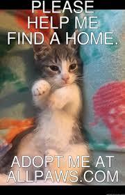 Cat Memes Generator - memes meme generator cat memes allpaws