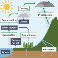 bbc bitesize gcse biology water nitrogen and carbon cycles