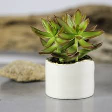 home design decoration tiny handmade ceramic planter walking big