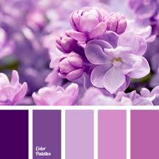shades of purple color cool shades of purple color palette ideas