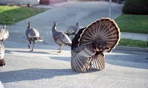 need a conversation starter here u0027s some turkey trivia fire