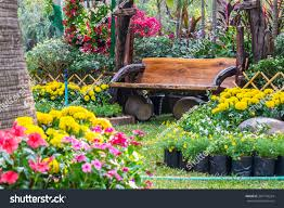 wood chair flowers garden flowers garden stock photo 387140224