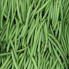 endeavour bean seeds