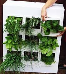 Urban Herb Garden Ideas - 83 best dubai garden images on pinterest gardening landscaping