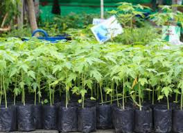 our commitment to quality includes biodegradable grow bags fast