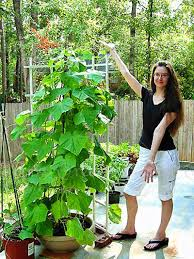 online buy wholesale growing vegetable plants from china growing