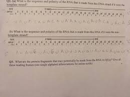 what is the sequence and polarity of the rna that chegg com