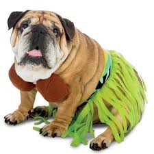 pet costume halloween zelda hula halloween dog costume with same day shipping baxterboo