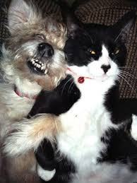 Friends Forever Meme - cat dog best friends have an adorable love hate moment photo