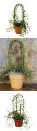the 25 best vine trellis ideas on pinterest plant trellis best